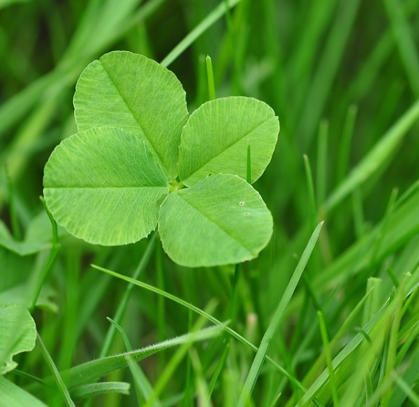 four-leaf-clover-711625_640